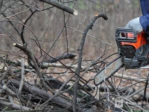 Троих жителей Шаранги оштрафовали за вырубку деревьев