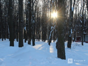Более 400 деревьев спилят в парке «Швейцария»