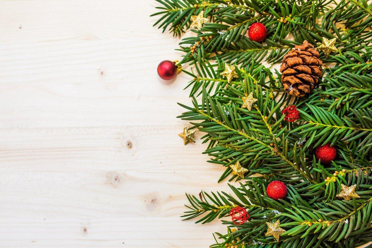 Искусственная или живая: в Роскачестве рассказали, как выбрать елку к Новому году - фото 3