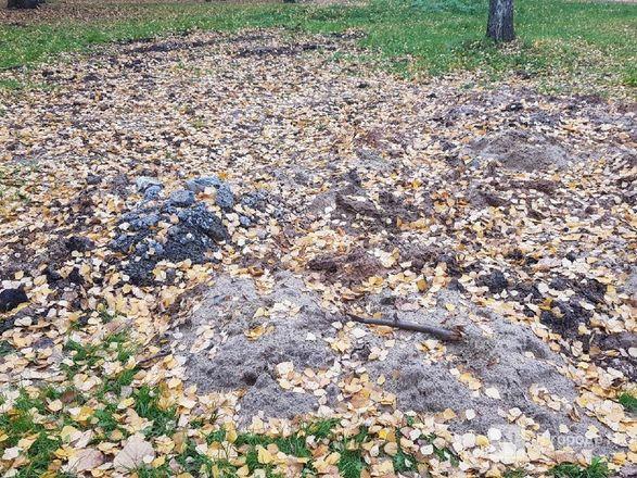 Недоблагоустройство: нижегородцы продолжают жаловаться на мусор в парке Пушкина - фото 13