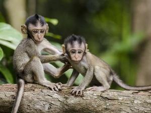 Родившиеся в год обезьяны смогут посетить зоопарк «Лимпопо» за полцены