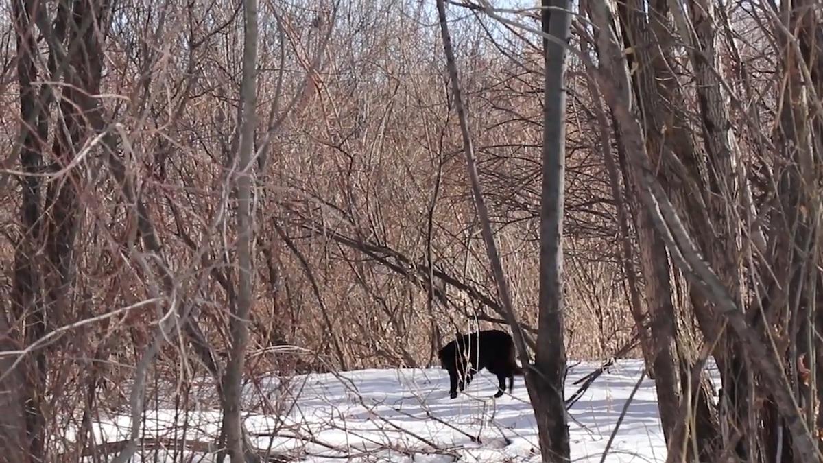 Собака, которую пытались спасти нижегородские спасатели, сама покинула остров - фото 1