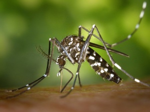 Комары и речная рыба могут исчезнуть в России после аномально теплой зимы