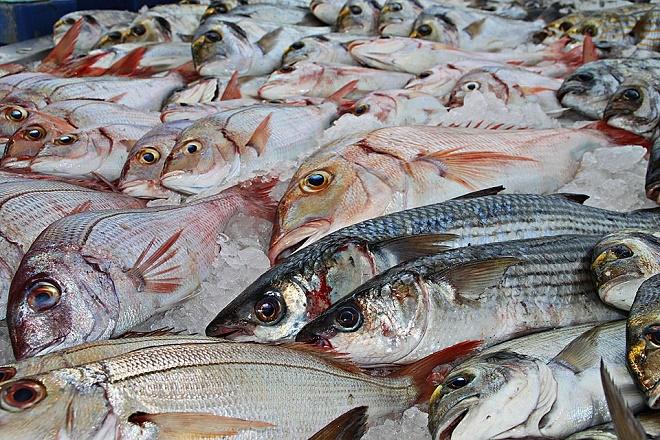 Рыбная отрасль региона увеличит объем продукции в2,5 раза