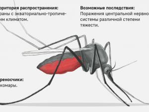 Нижегородцам напомнили о заболевания, передающихся при укусах комаров