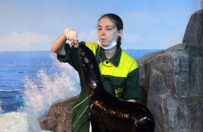 Северный морской котик Зонтик прибыл в нижегородский зоопарк - фото 4