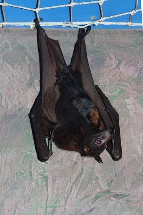 Два летучих мышонка родились в нижегородском зоопарке в канун Хэллоуина  - фото 3