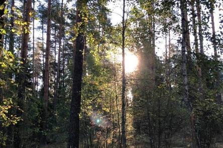 Нижегородцы создали петицию против вырубки леса вокруг Мухтоловских озер