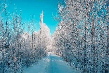 Активисты добились корректировки плана озеленения «Швейцарии» в Нижнем Новгороде
