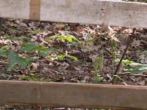 Защитные ограждения для краснокнижных растений установили в парке «Швейцария»