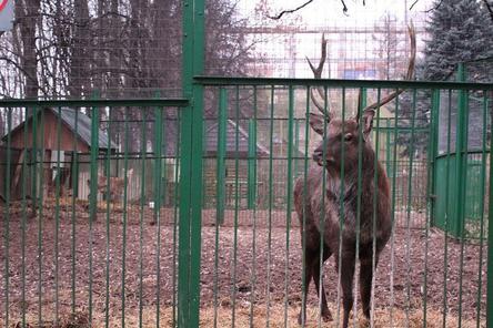 Прокуратура начала проверку нижегородского зоопарка «Мишутка»