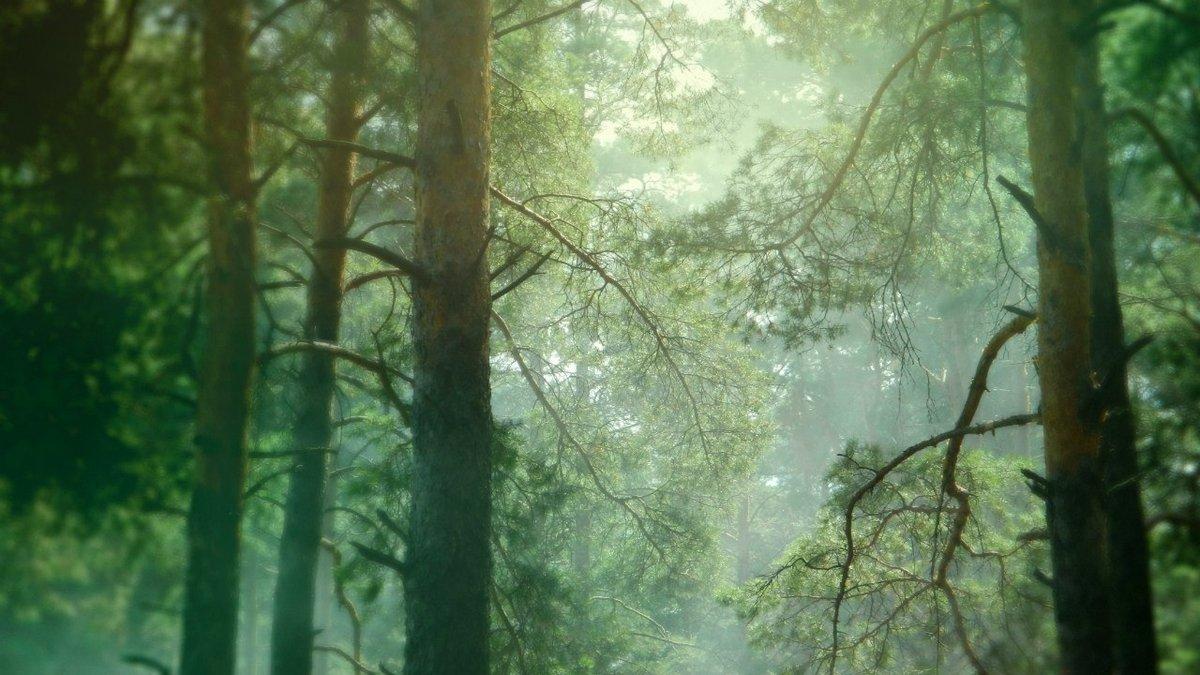 «Лесник» поможет выслеживать «черных лесорубов» в Нижегородской области - фото 1