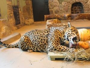 Обитатели нижегородского зоопарка отпразднуют Масленицу